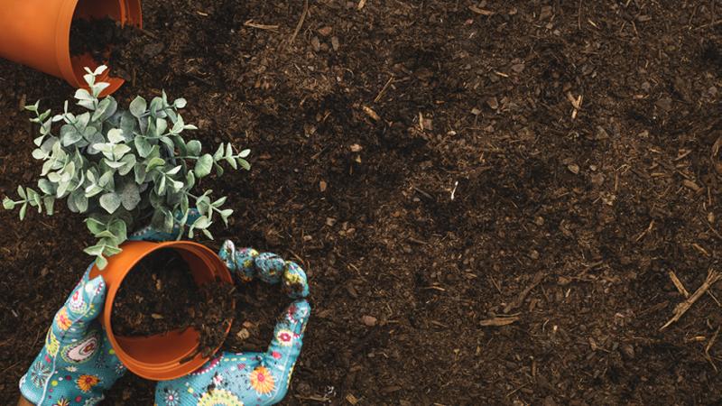 Spring-Gardening-tips-Theos-nursery