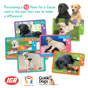North-Lakes-Qld-Paws-for-a-cause