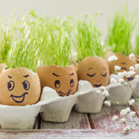 Grow-plants-in-eggshells