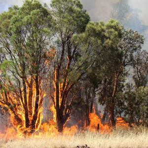 australian-bushfires-2020