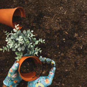 Theos-Nursery-Spring-gardening-tips